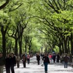 Urban Trees: A Smart Investment in Public Health